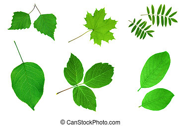 Many green leaves  - Green leaves collection set