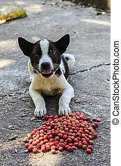 thai puppy stray dog eating