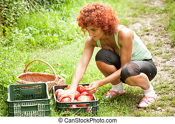 Young lady sorting tomatoes in boxes outdoors