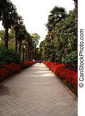 botanica, jardim