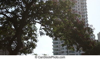 skyscraper behind large tree in asian city - tall skyscraper...