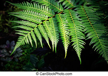 green fern leaves against darkness background use for purity...