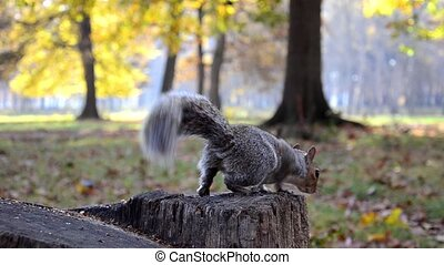 a squirrel catches a nut