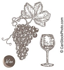 Bunch of grapes and wineglass Vector illustration in sketch...