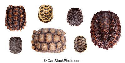 Different Tortoiseshells on white - Different Tortoiseshells...