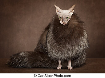 Sphinx cat wearing a coat with fur - Don Sphinx cat dressed...