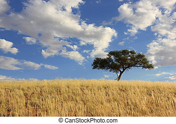 Lone tree - A Lonely tree in the grassland, Africa