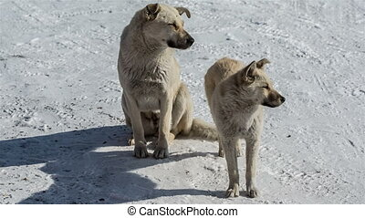Two dogs on snow in winter