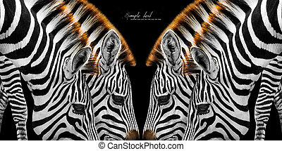 Zerra - Close-up of two zebras brown mane. bend grass is so...