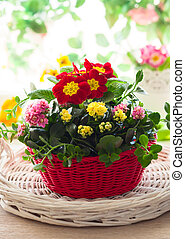 Spring flowers in red bucket