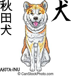 vector sketch dog Akita Inu Japanese breed smiles - color...