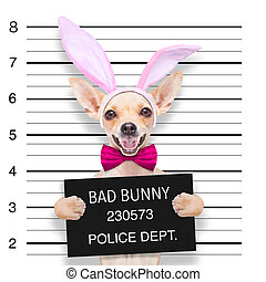 easter mugshot dog - very bad chihuahua dog, at the police...