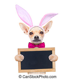 bunny easter ears dog - chihuahua dog with bunny easter ears...