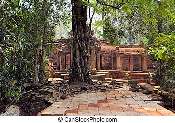 Ancient Angkor Era temple overgrown by trees, Cambodia -...