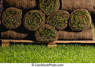 Sod Background - rolls of turf lying on the grass