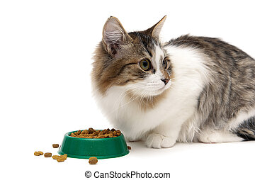 fluffy kitten eats food from the green bowl on a white...