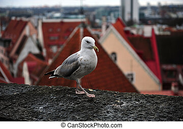My Town, My View - A seagull shows no fear as I approach it...