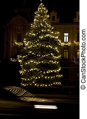 christmas tree - nightshoot christmas tree. outdoor...