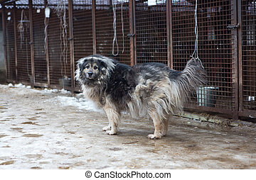 Shelter for homeless dogs - Large dog on the background of...