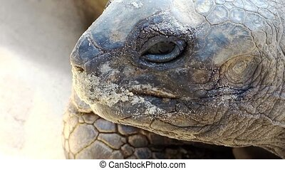 giant tortoise close up - Reptiles world Portrait of a giant...
