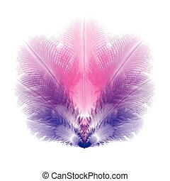 Group of violet and pink feathers