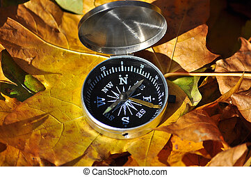 Compass in fallen leaves. Autumn walk with orientation in...