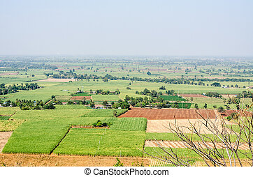 Top view of sugar cane fields