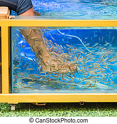 Fish spa pedicure - fish pedicure spa treatment, rufa garra...