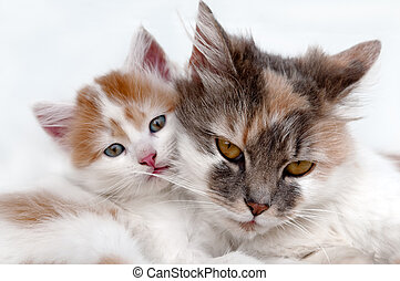 cat and kitten on blue background