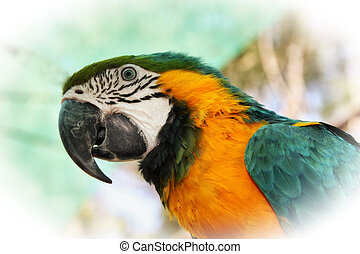 Striking Close-up portrait picture of colourful Macaw head...