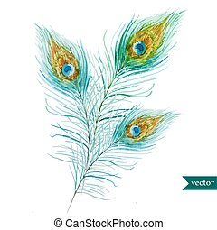 Peacock feather - Beautiful vector set with watercolor...