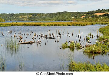 Pond in marshland on the island of Chiloe, Patagonia, Chile