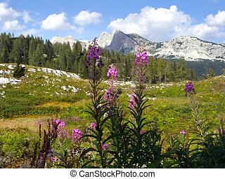Alpine Meadow - The valley of Triglavs Lakes. Triglav...