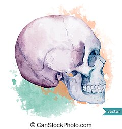 Nice skull - Beautiful vector illustration with watercolor...
