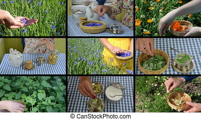 natural herb tea collage