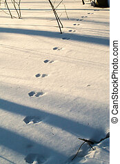 Rabbit Tracks in the Winter Snow - A set of rabbit tracks in...