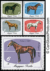 Stamps printed in Hungary shows Horses - HUNGARY - CIRCA...