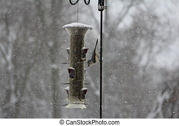 Titmouse at birdfeeder - Tufted Titmouse at birdfeeder in...