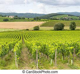 Montalcino (Tuscany, Italy) - Montalcino (Siena, Tuscany,...