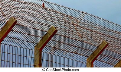 Protected area with fence and mesh at the top and sparrow