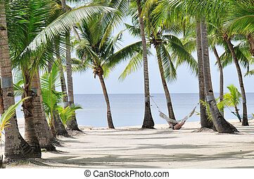 Palm Beach - Tropical Palm beach with Hammock