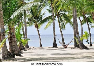 Palm Beach - Tropical Palm beach with Hammock
