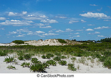 Natural Beach Landscape - The natural plant life on the sand...