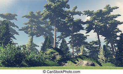 Sunny day in the pine forest 4 - Beautiful woodland scenery...