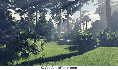 Sunny day in the pine forest 7 - Beautiful woodland scenery...