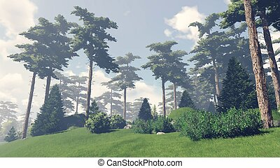 Sunny day in the pine forest 9 - Beautiful woodland scenery...