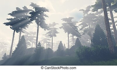 Sunbeams shine through the pines 1 - Beautiful woodland...