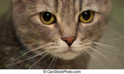 Morphing of  feline