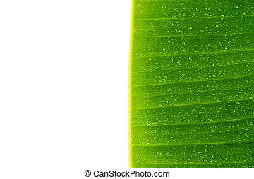 Banana leaves isolated on white background