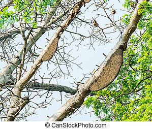 蜂窩, 或者, 蜂窩, 上, the, 大, 樹, 在, 森林,